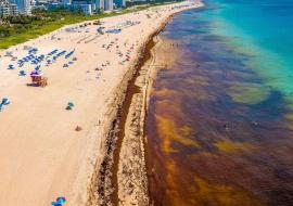 sargassum from the air